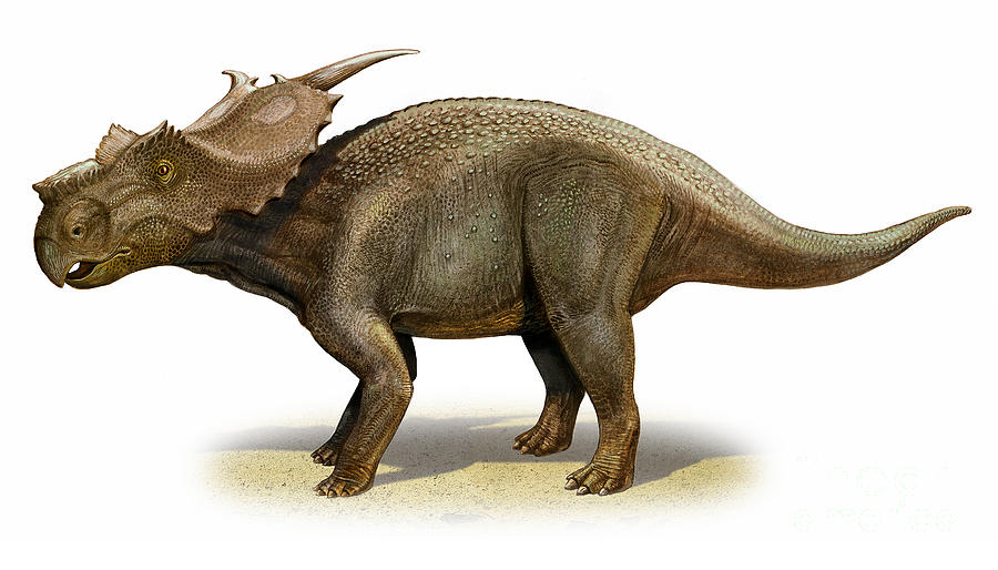 Horizontal Digital Art - Achelousaurus Horneri, A Prehistoric by Sergey Krasovskiy
