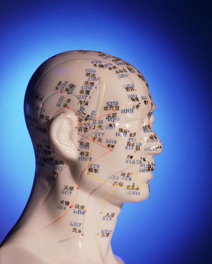 Acupuncture Chart On A Cast Of A Head And Neck Photograph ...