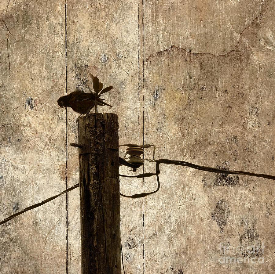 Bird Photograph - Adaptation by Ellen Cotton