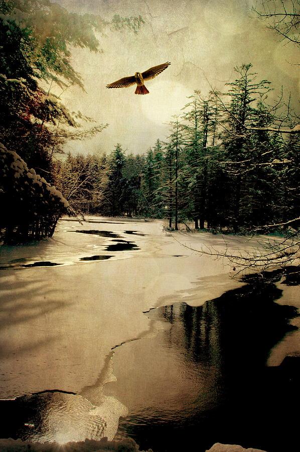 Bird Photograph - Adirondack Hawk by Emily Stauring