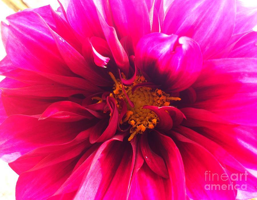 Flora Photograph - Adorable Flora  by Ankeeta Bansal