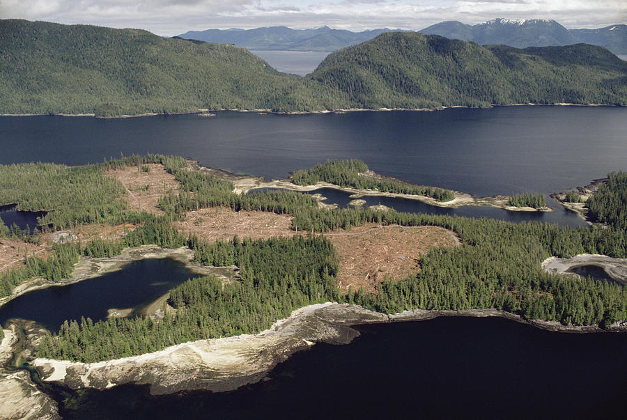 Aerial View Of Clearcut Temperate Photograph by Gerry Ellis