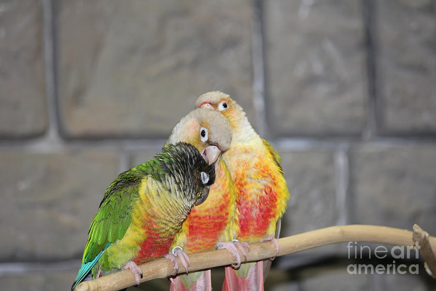 Birds Photograph - Affection by Scenesational Photos
