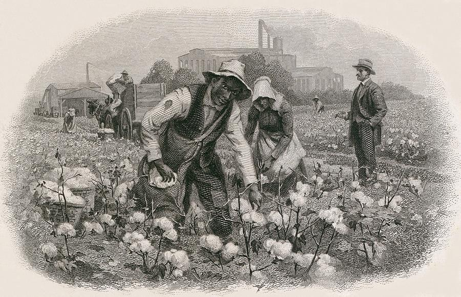 History Photograph - African Americans Pick Cotton by Everett