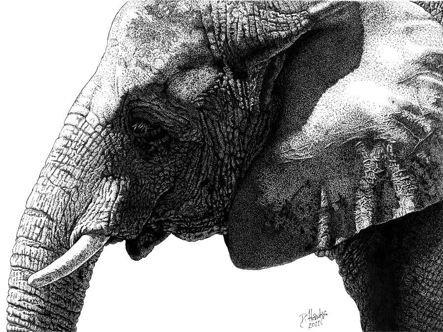 African Elephant In Profile Drawing By Douglas Hawks