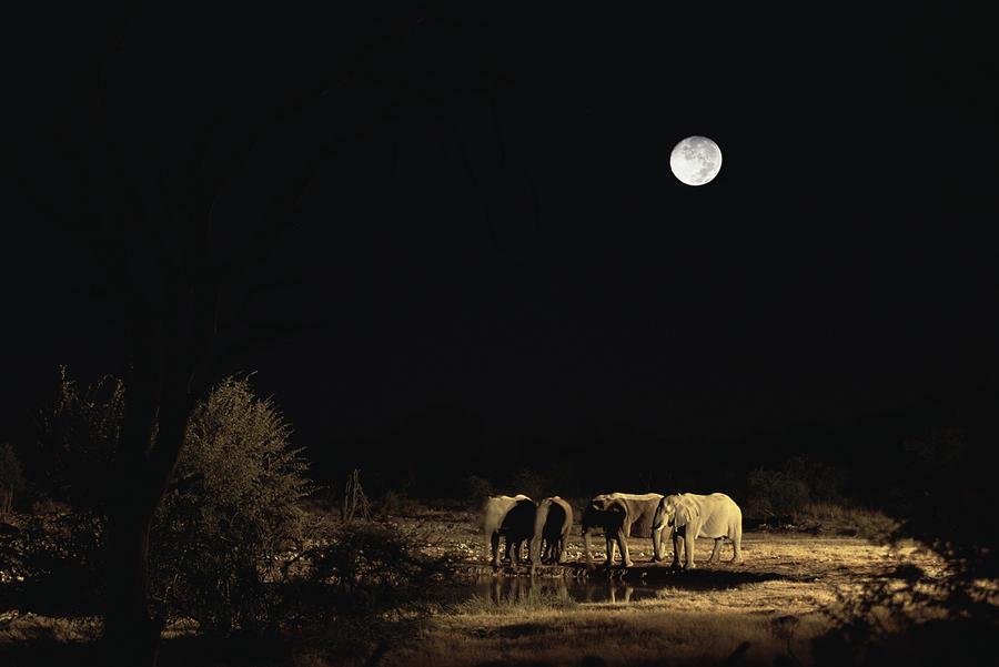 African Elephant Loxodonta Africana Photograph by Konrad Wothe