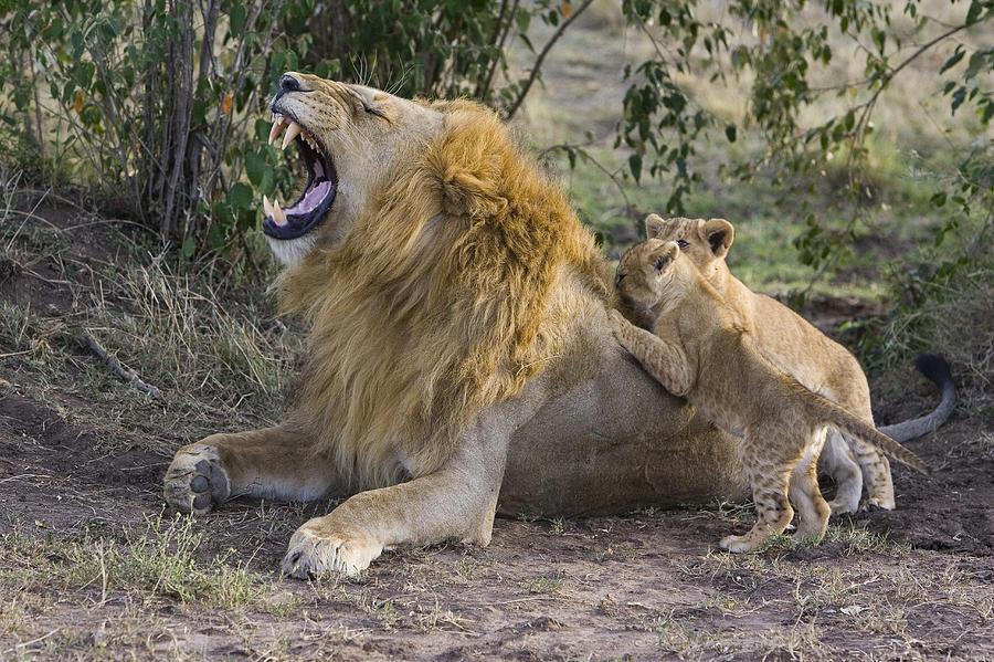 царь зверей демотиваторы показалось проводнице подозрительным