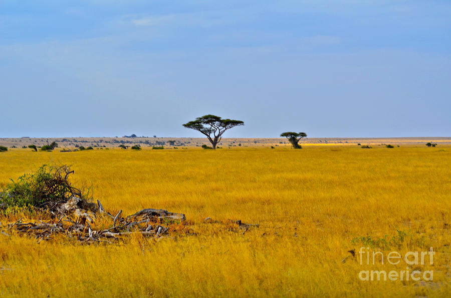 African Savanna Digital Art By Pravine Chester