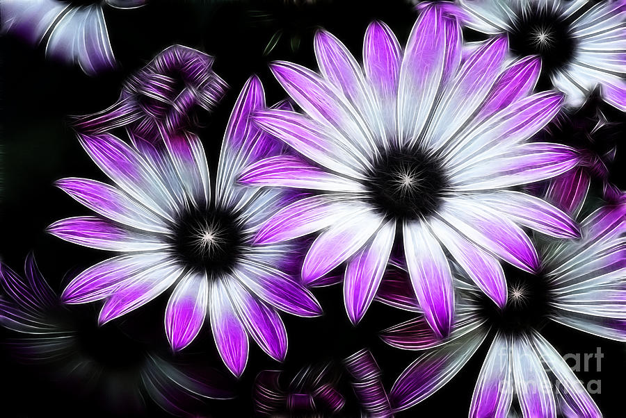 Flowers Photograph - Africian Daisy by Carol A Commins