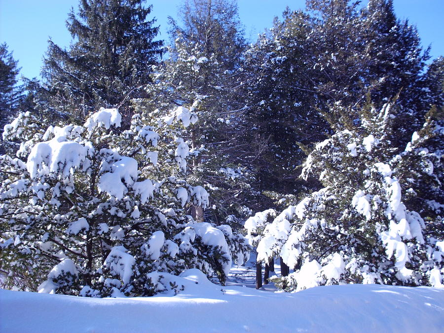 Snowstorm Photograph - After A New England Snowstorm by Lucien Beauley