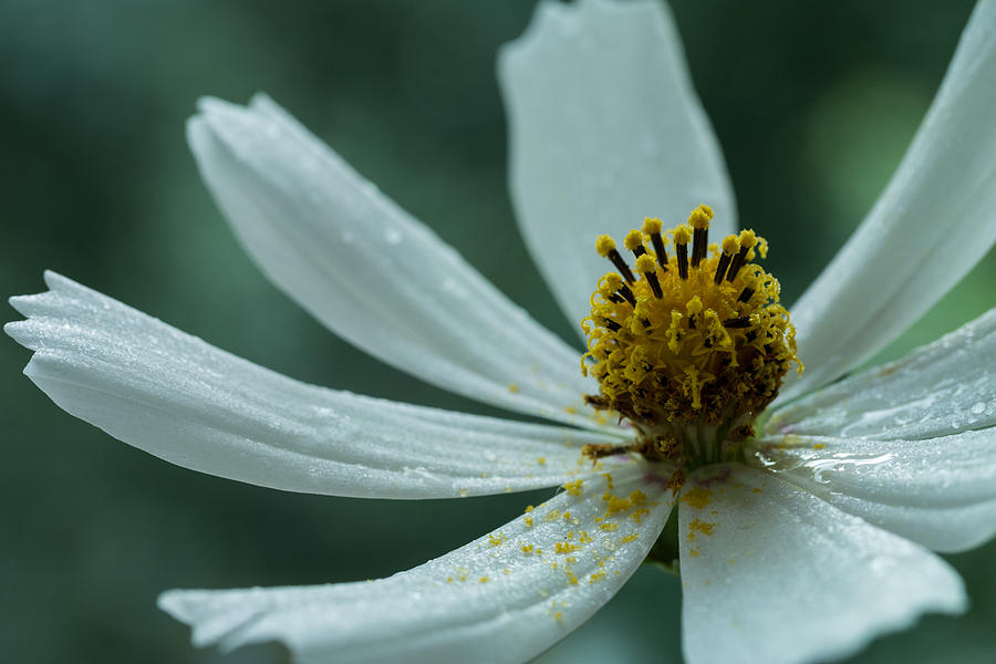 Bloom Photograph - After Rain by Daniel Kulinski