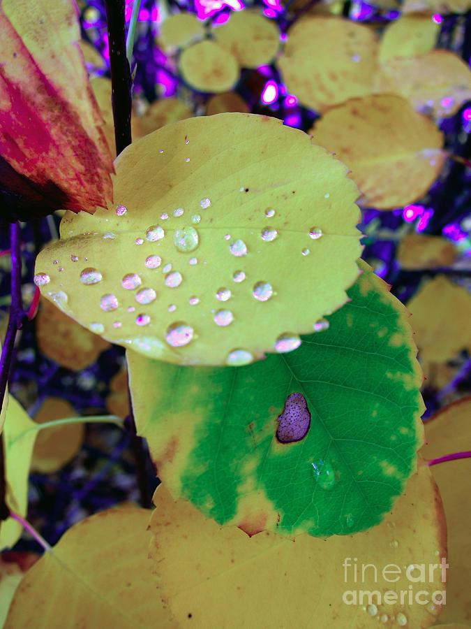 Leaf Photograph - After Rain by Michelle Bergersen