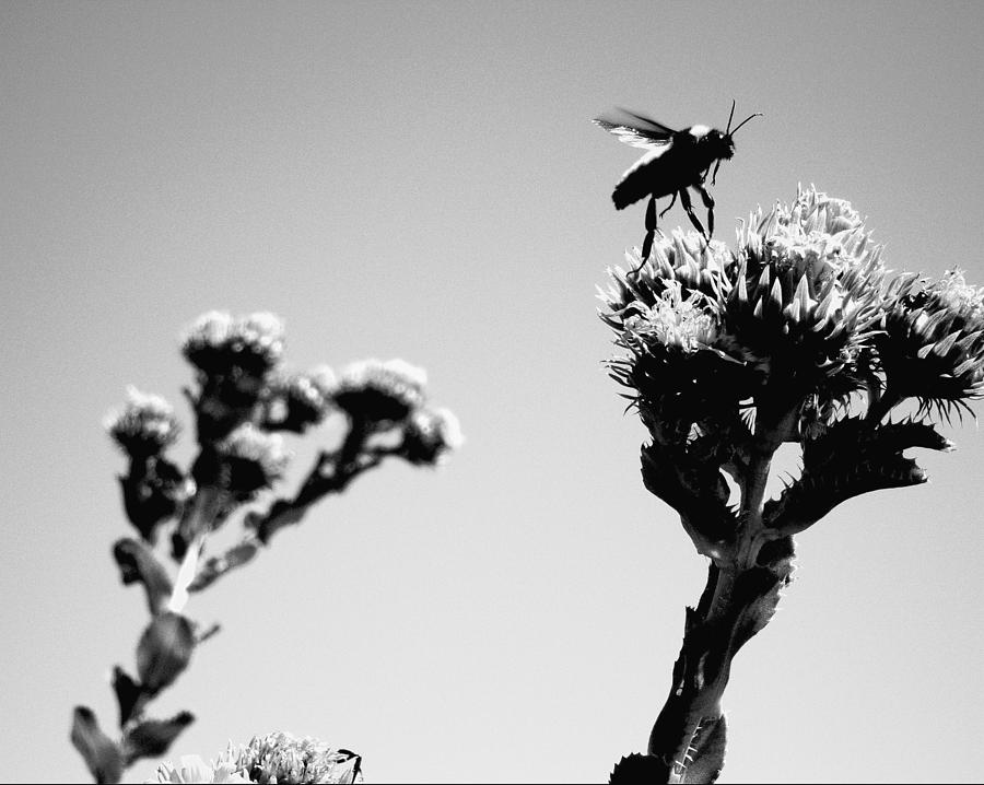 Plants Photograph - After Refueling  by Douglas Barnard