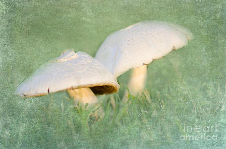 Mushroom Photograph - After The Rain by Betty LaRue