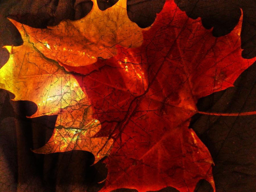 Fall Leaves Photograph - After The Rain by Denisse Del Mar Guevara
