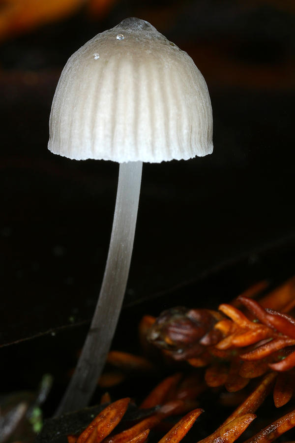 Mushroom Photograph - After The Rains Fall by C Ribet