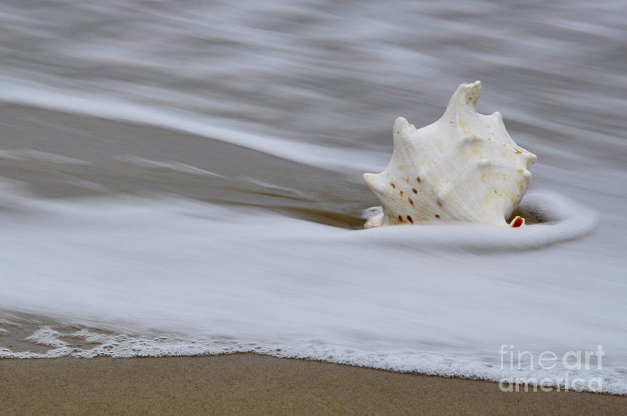 Sea Photograph - After The Wave by Tamera James