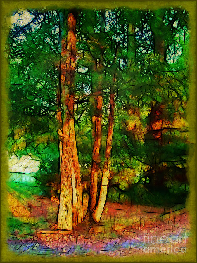 Trees Photograph - Afternoon Delight by Judi Bagwell
