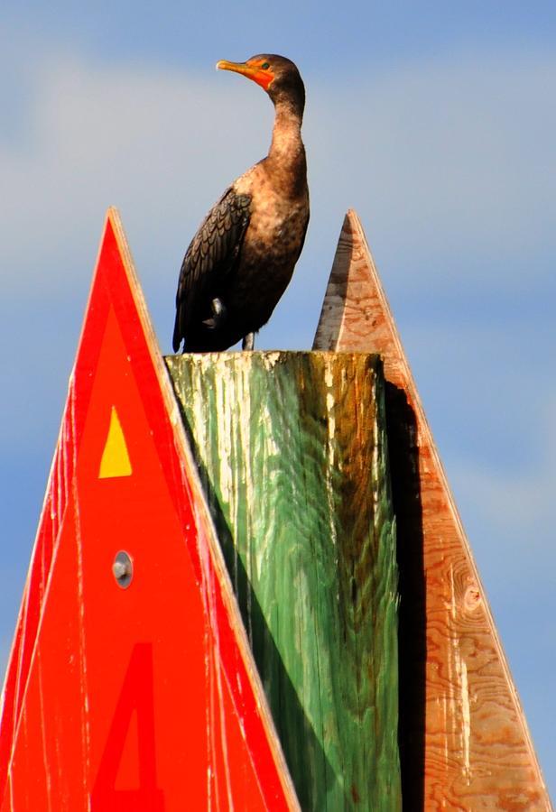Great Blue Heron Digital Art - Afternoon Fishing by Barry R Jones Jr