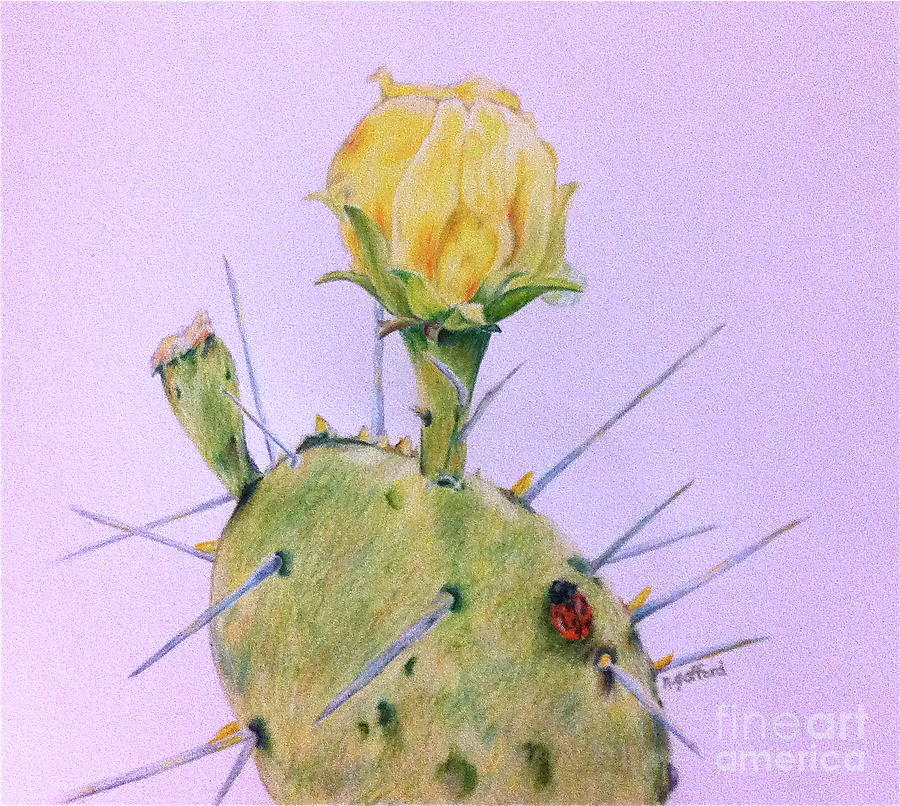 Cactus Painting - Afternoon Nap by Norma Gafford