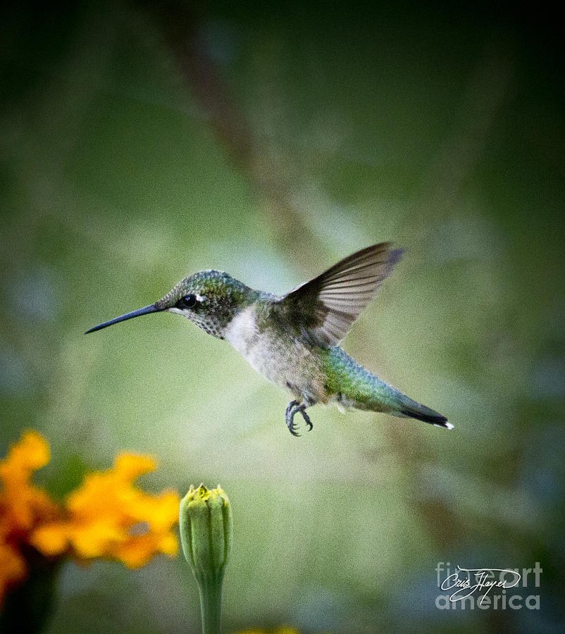 Flower Photograph - Afternoon Snack - Artist Cris Hayes by Cris Hayes