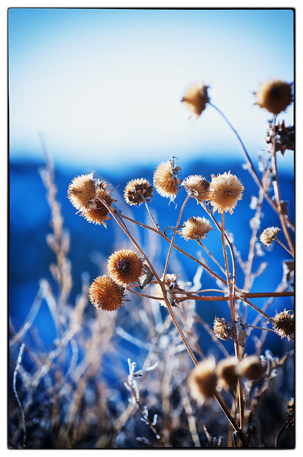 Nature Photograph - Against The  Blue Sky by Lisa  Spencer