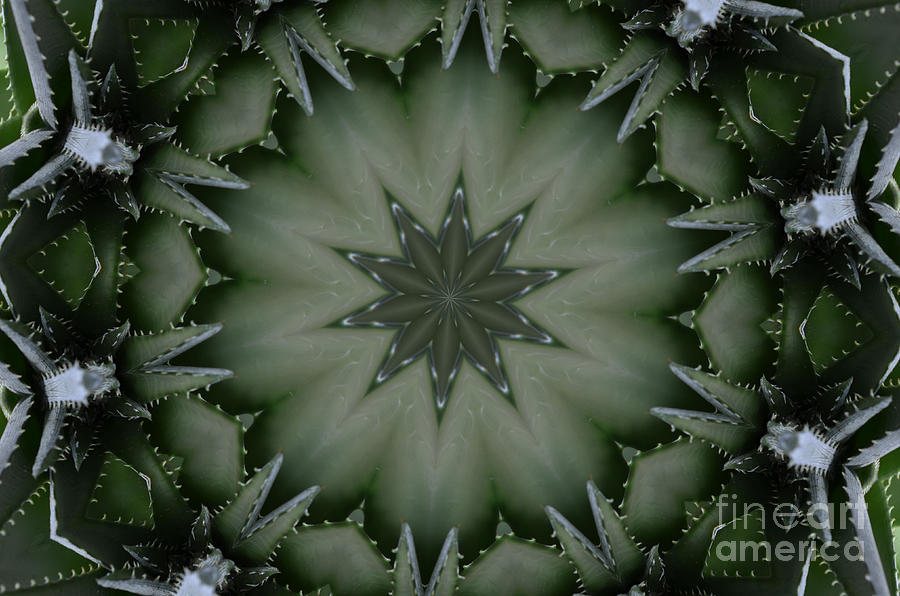 Abstract Photograph - Agave by Paulina Roybal