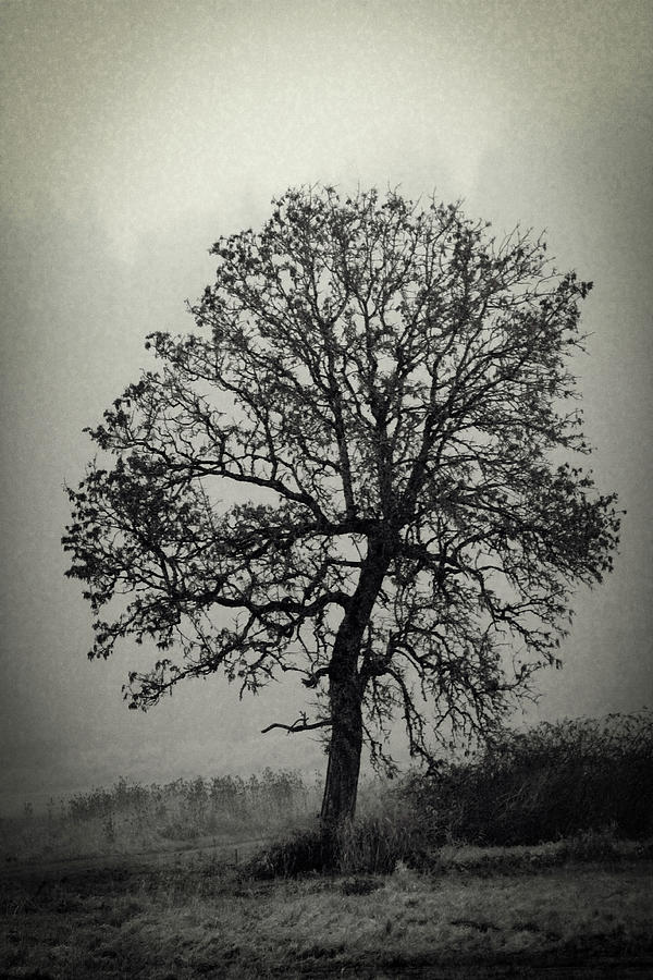 Black And White Photograph - Age Old Tree by Steve McKinzie