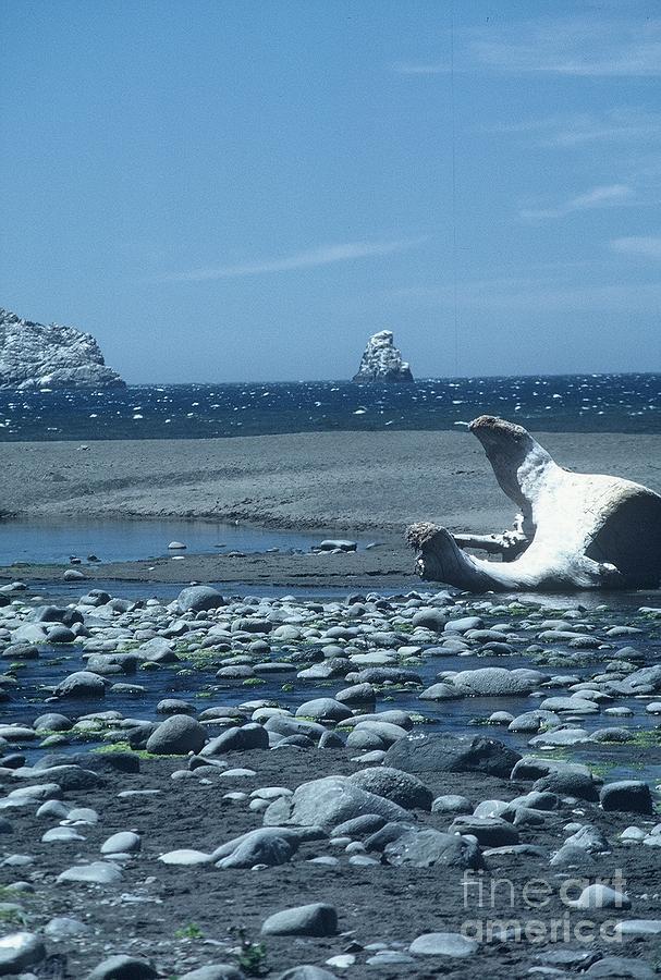 Photo Photograph - Ahoy by Alcina Morello