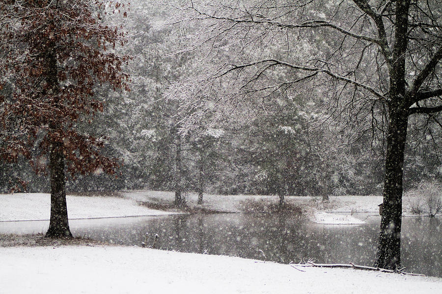 Alabama Winter Wonderland Photograph By Kathy Clark