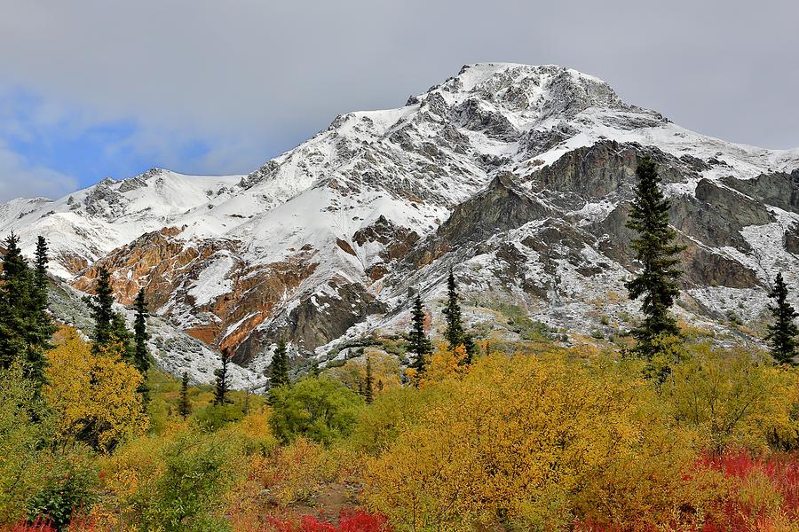 Chugach Photograph - Alaska Fall Colors On Sheep Mountain by Sam Amato