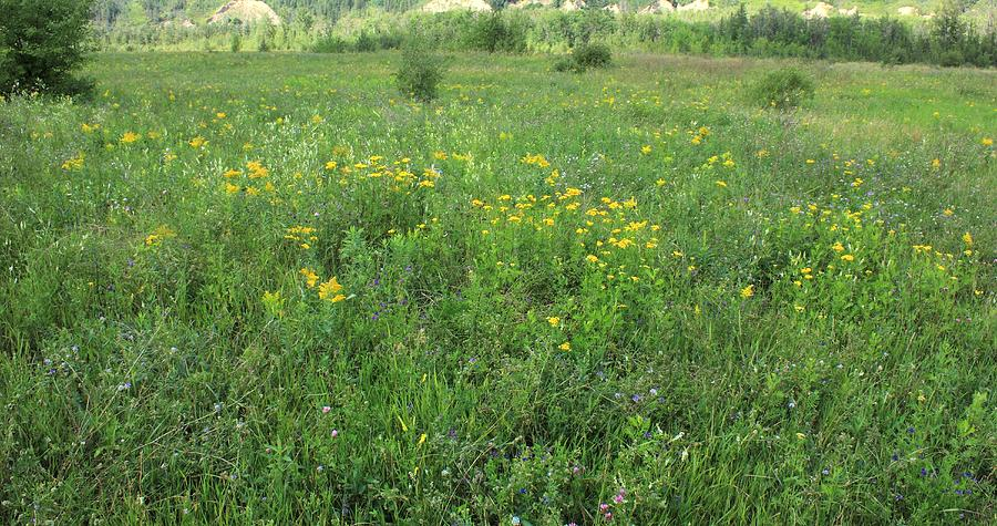 Flowers Photograph - Alberta Summer Meadow by Jim Sauchyn