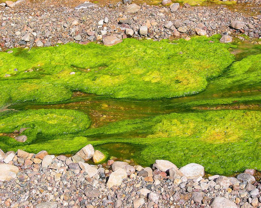 Algae Bloom Photograph - Algae Bloom Natural Abstract Art Of Nature by Merton Allen