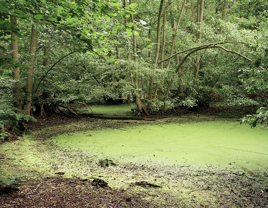 Cyanobacteria Photograph - Algal Bloom In Pond by Michael Marten
