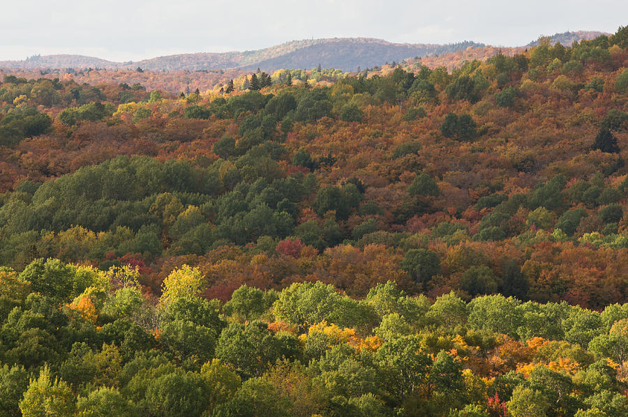 Fall Photograph - Algonquin In Autumn by Cale Best
