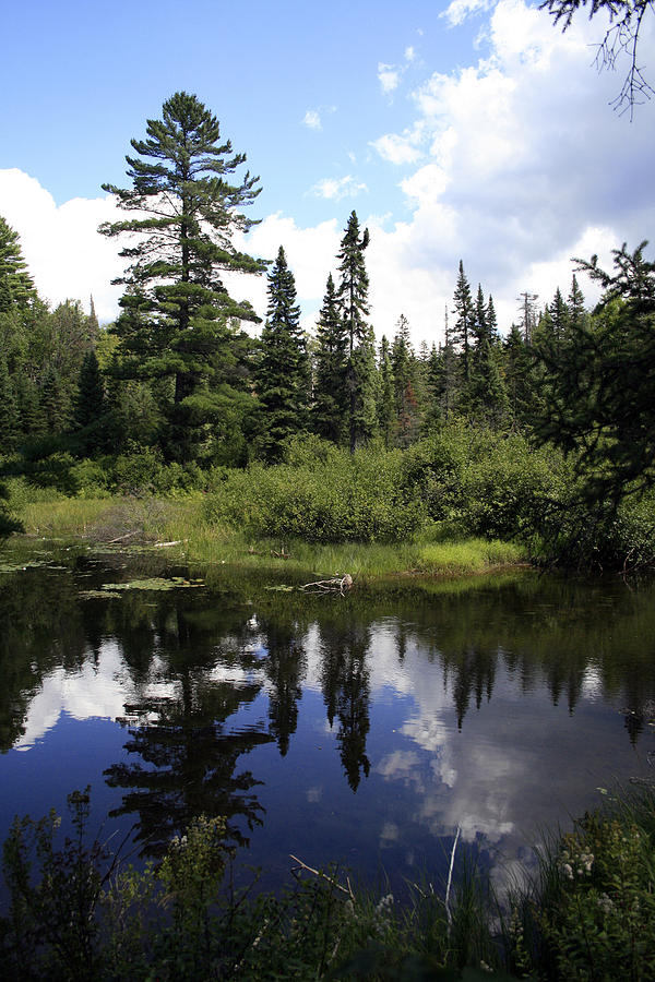 Landscape Photographs Photograph - Algonquin Odes Two by Alan Rutherford