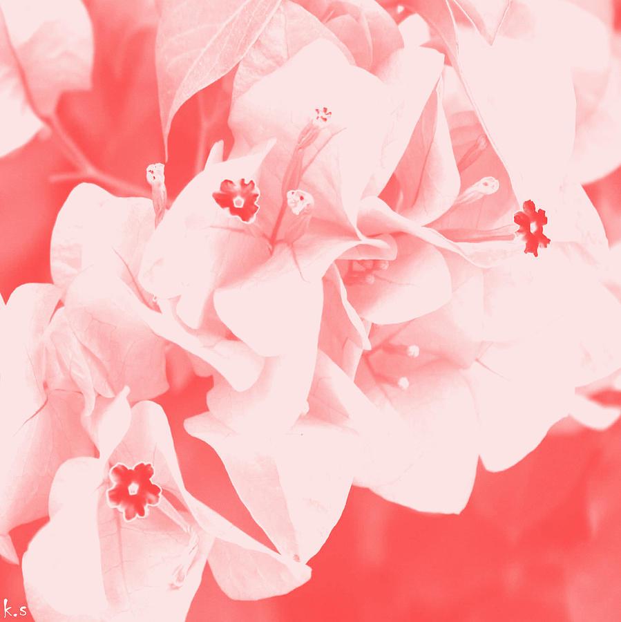 Pink  Digital Art - Ali by Keren Shiker