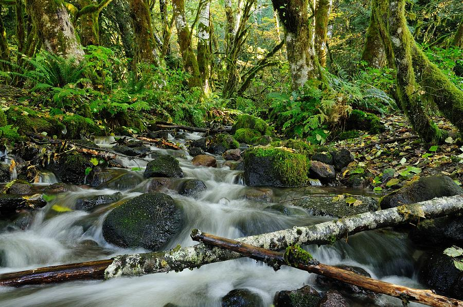 Creek Photograph - Alice Creek by Sandra Sigfusson