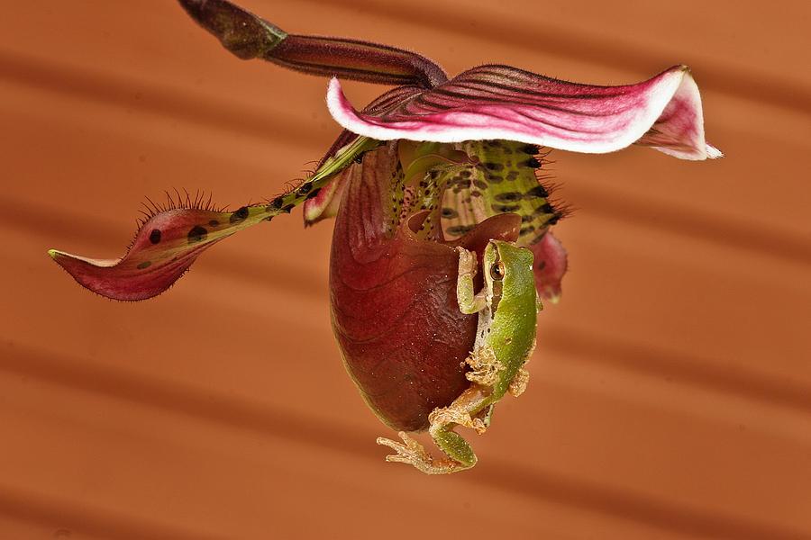 Amphibians Photograph - All Aboard by Jean Noren