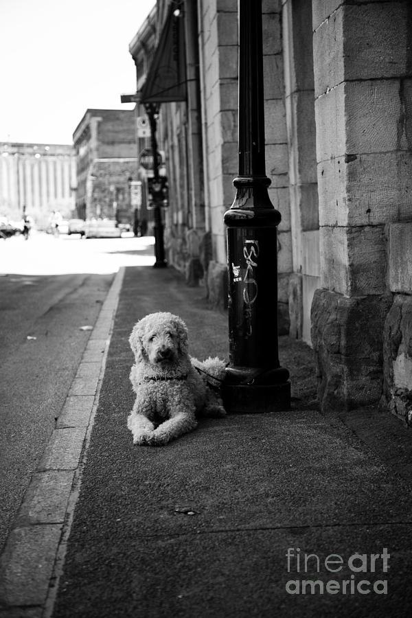 Dog Photograph - All Alone by Leslie Leda