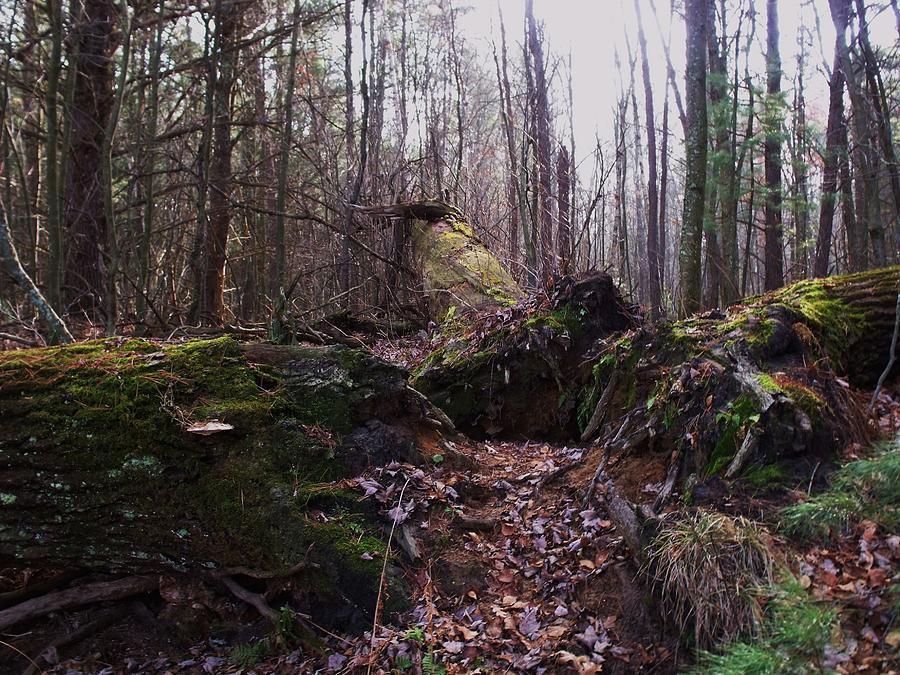 Forest Photograph - All Fall Down by Anna Villarreal Garbis