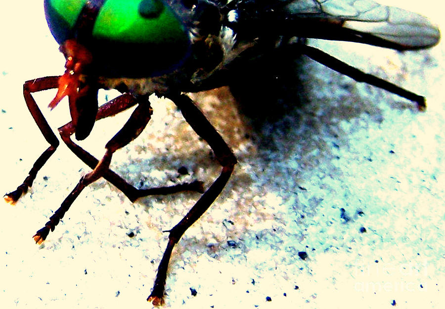 Horse Fly Photograph - All Gods Creatures Resting Wings by Shannons Photos