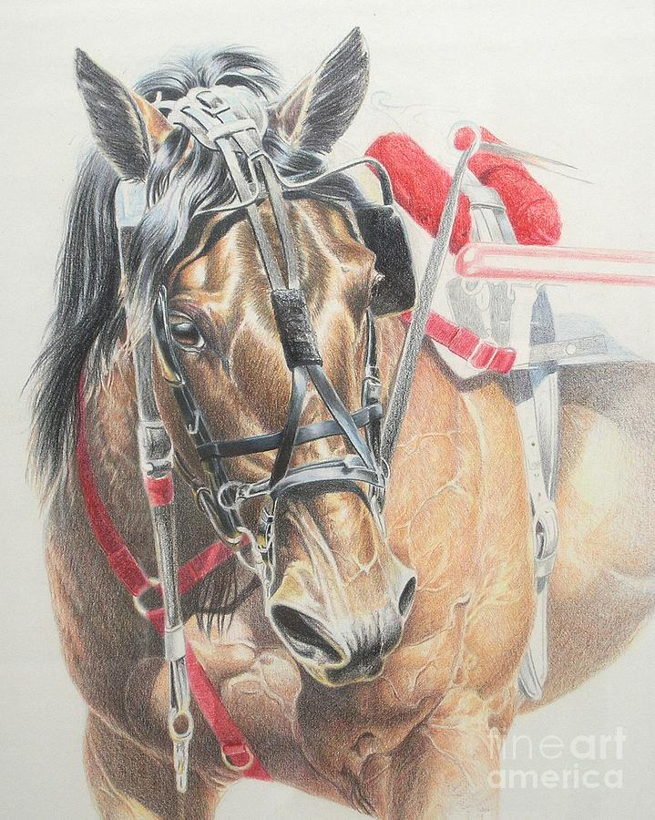 Colored Pencil Drawing - All Heart by Carrie L Lewis
