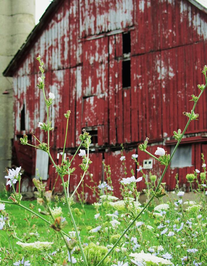 Barn And Flowers Photograph - All That Is Good by Todd Sherlock