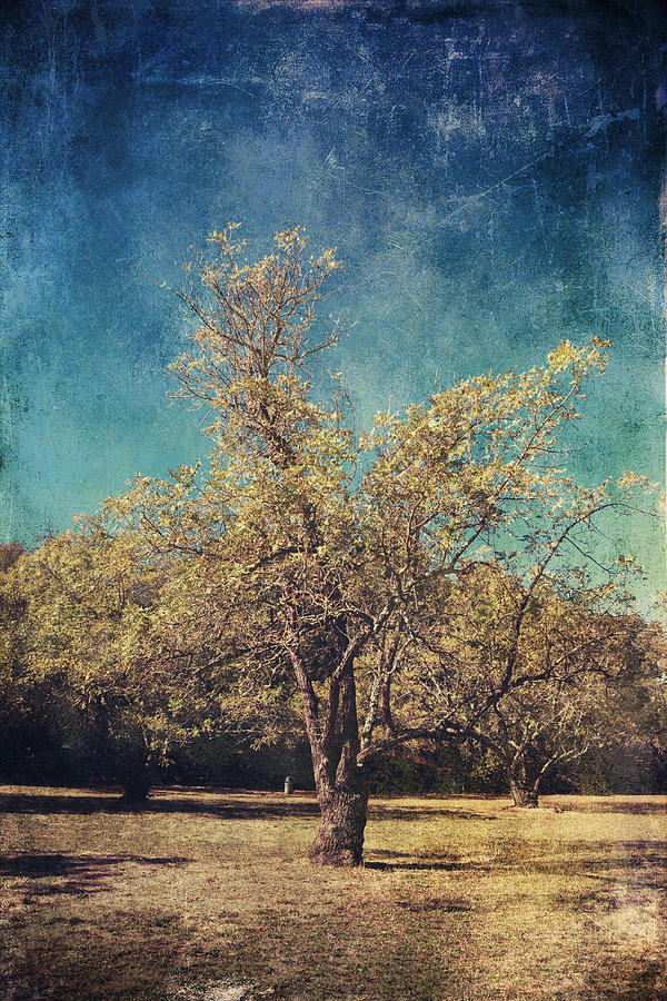 Trees Photograph - All Thats Unknown by Laurie Search