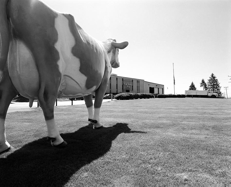 Wisconsin Photograph - All We Have We Owe To Udders by Jan W Faul