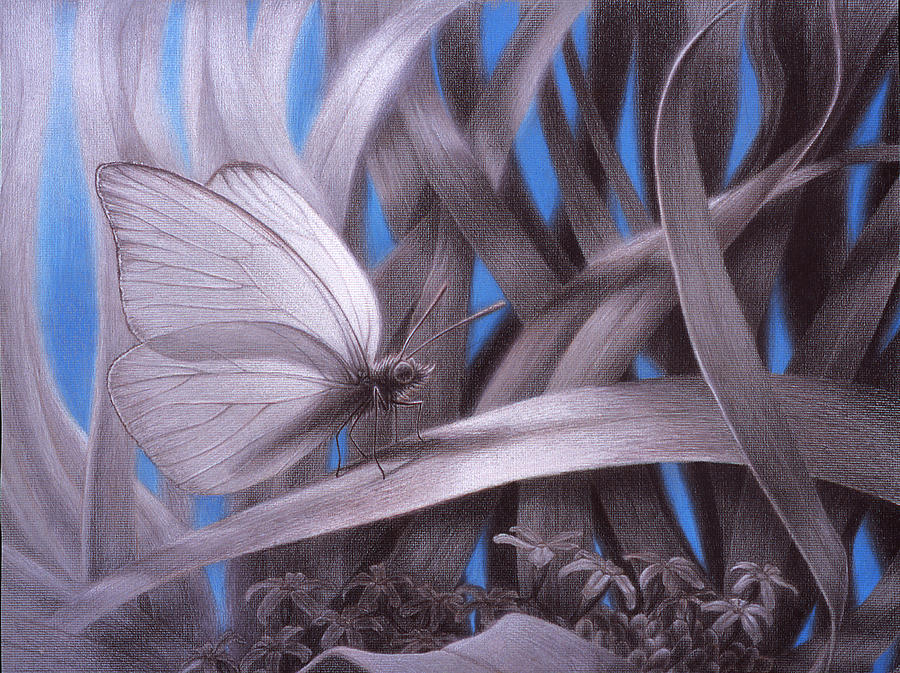 Butterfly Painting - Allambie to remain awhile by Shawn Kawa