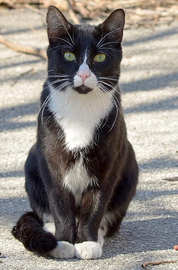 Alley Cat Photograph - Alley Cat by Lisa Phillips