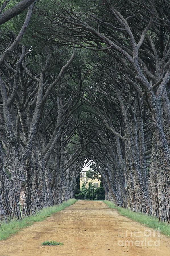 Europe Photograph - Alley . Provence by Bernard Jaubert