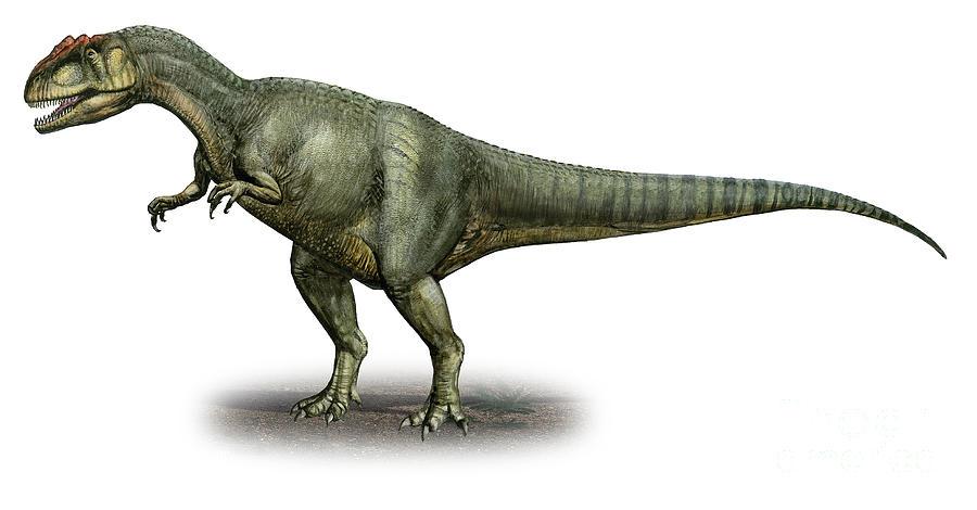 Allosaurus Fragilis A Prehistoric Era Digital Art By